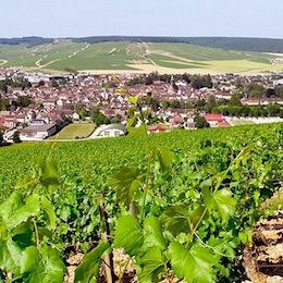 Вид на виноградники и деревеньку Шабли