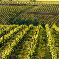 Визит в долину Луары немыслим без дегустации местных вин